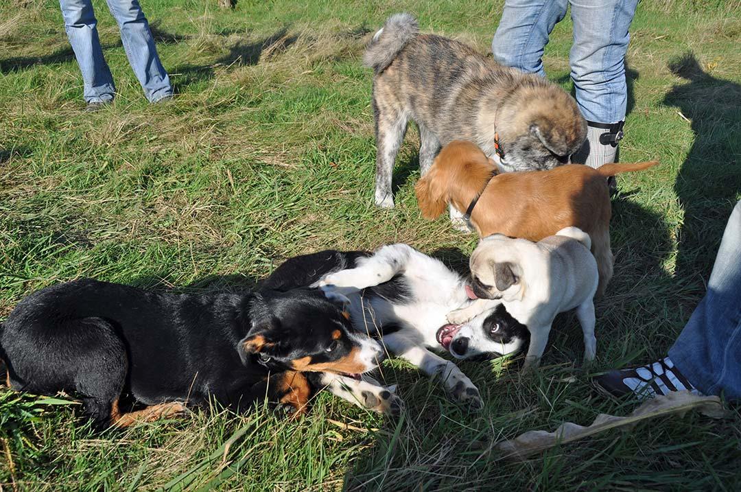 Jetzt entscheidet sich, ob ihr Welpe ein umweltsicherer und sozialkompetenter Hund wird